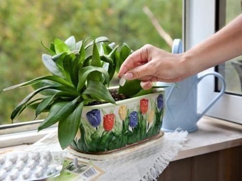 как используют дрожжи для подкормки растений