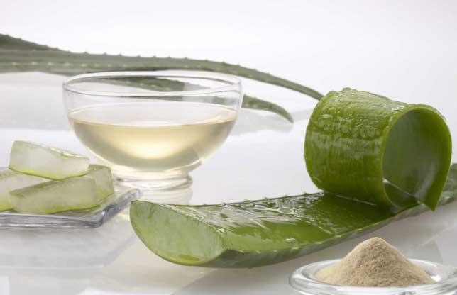 применение листьев алоэ  в народной медицине