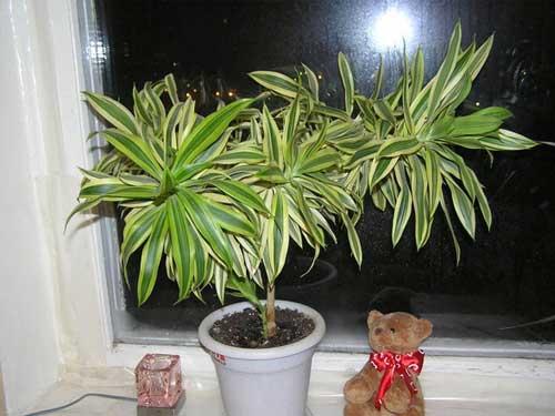 Как вы будете ухаживать за своим растением