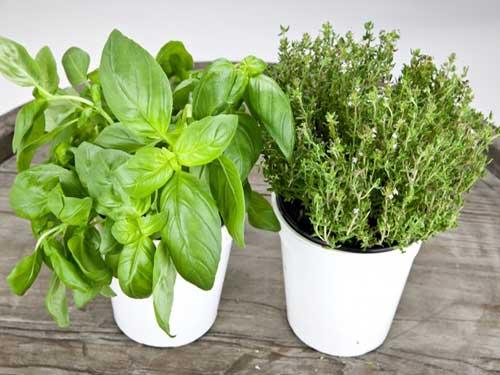 растения для дома полезные
