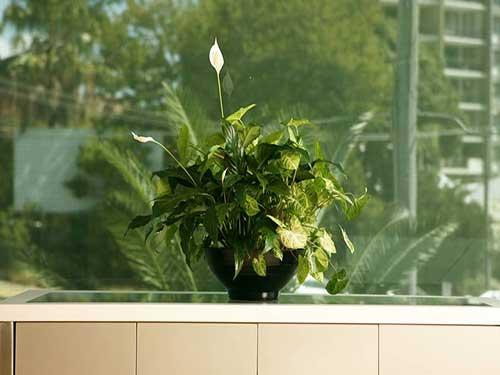 какую пользу приносят комнатные растения