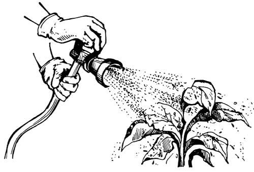 как проводится внекорневая подкормка растений