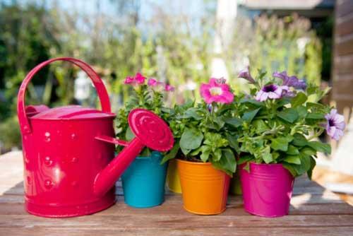 Полив растений водой