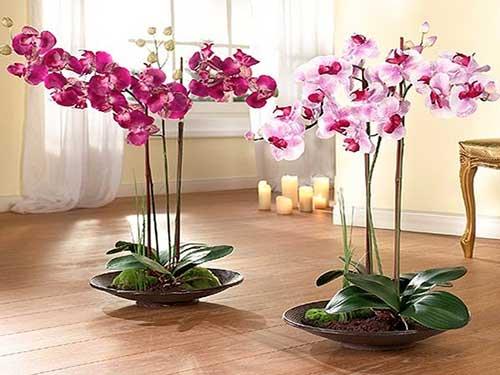 орхидеи и уход за ними