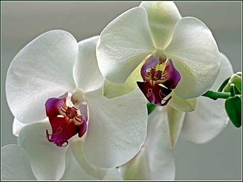 как правильно и эффективно ухаживать за своими орхидеями дома