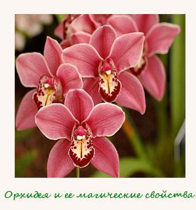 orhidej