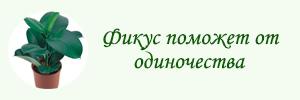 фикус
