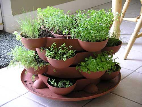 комнатные растения полезные для дома