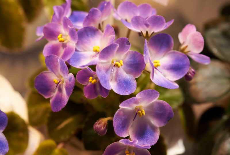 Как бороться с нематодой? Выбросить или лечить растение?