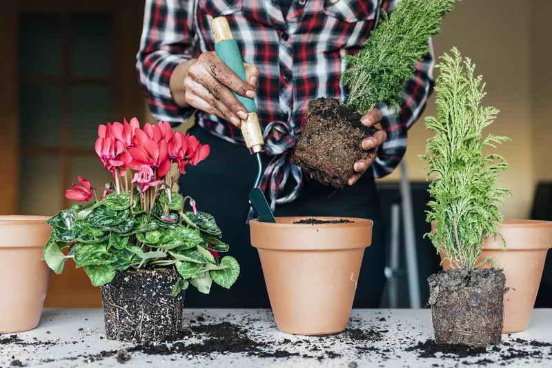Земля для цветов