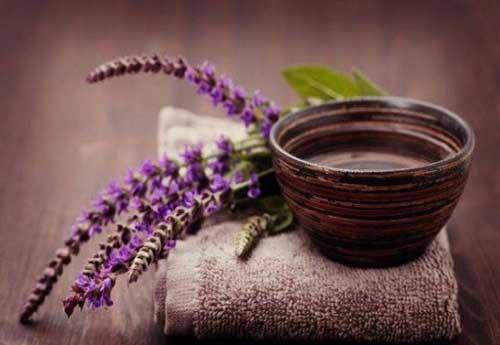 трава шалфей и его уникальные лечебные свойства