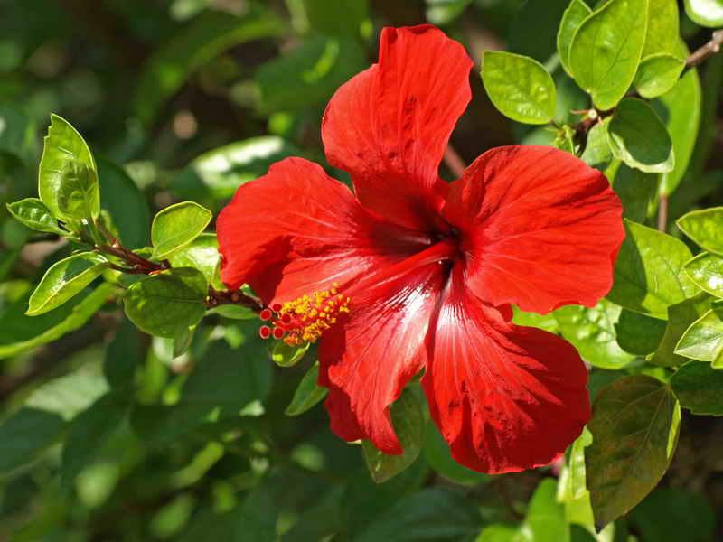 Какие виды домашних цветов нужны: ракам, львам и девам?