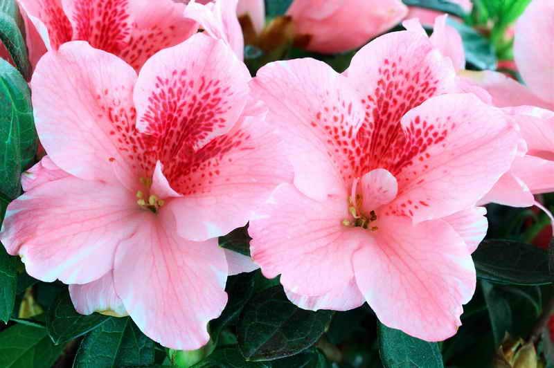 Выбираем домашние растения по знаку зодиака