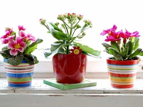 Какие растения полезные для здоровья