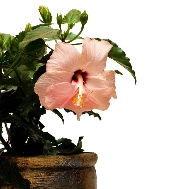 Растения подходящие знаку зодиаку Лев по гороскопу