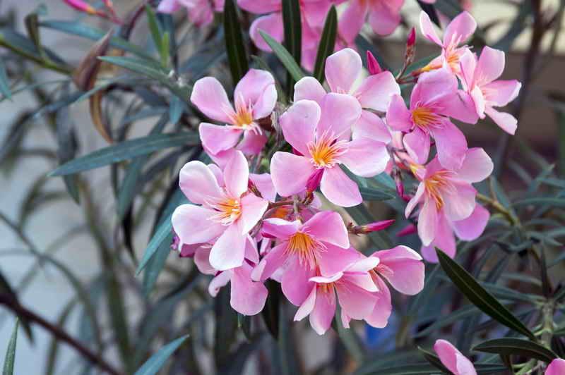 Растения подходящие знаку зодиаку Скорпион по гороскопу