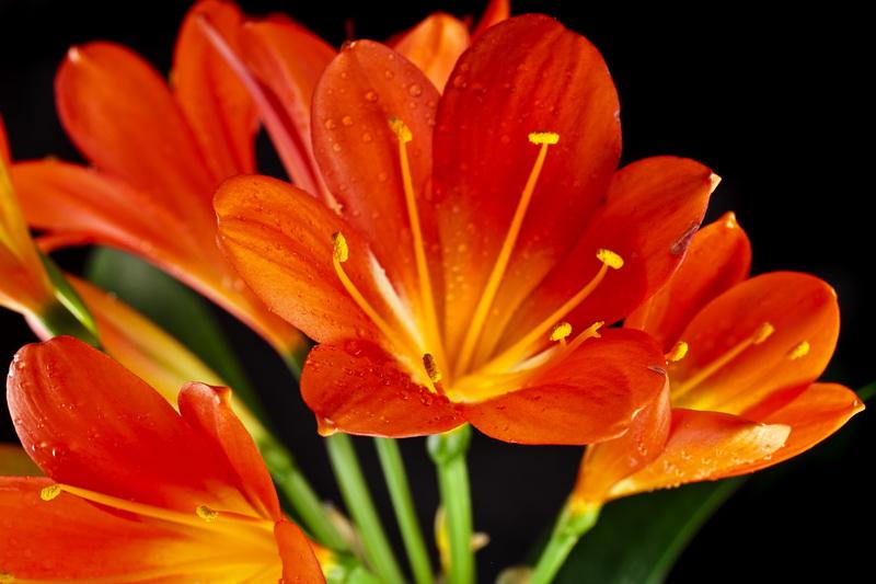 Растения подходящие знаку зодиаку Стрелец по гороскопу