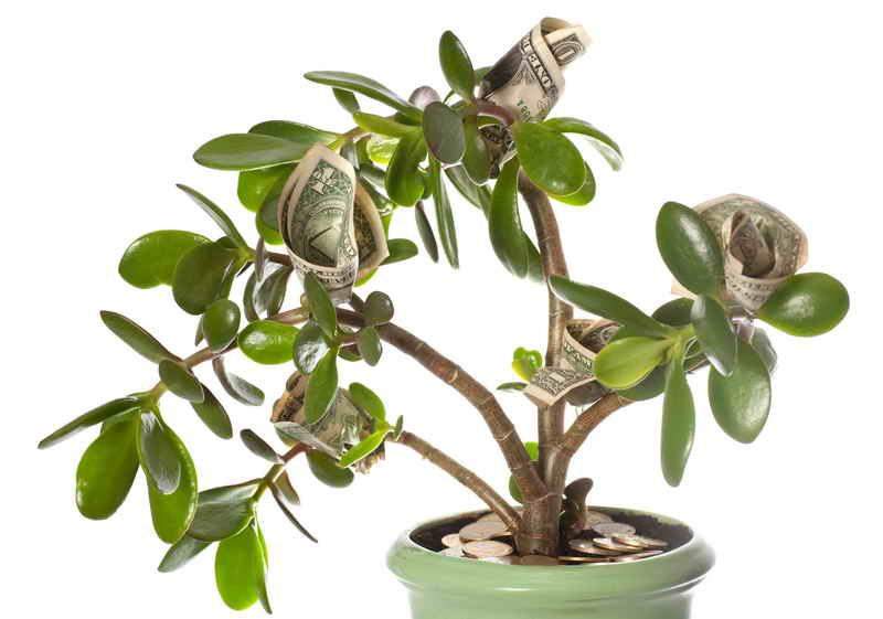 Растения подходящие знаку зодиаку Козерог по гороскопу