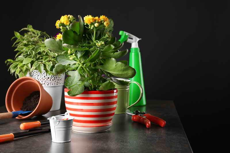 Какие растения держать дома? Или как выбирать растения правильно
