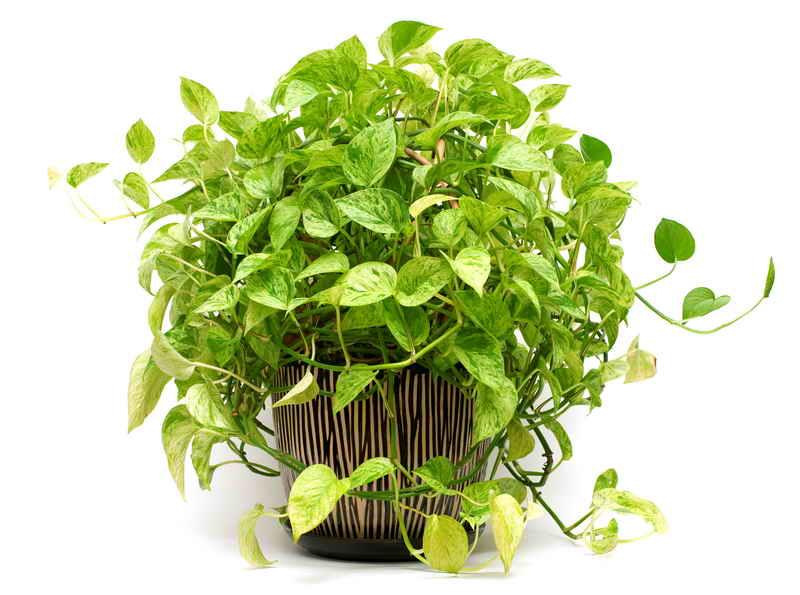 Ваши комнатные растения дома