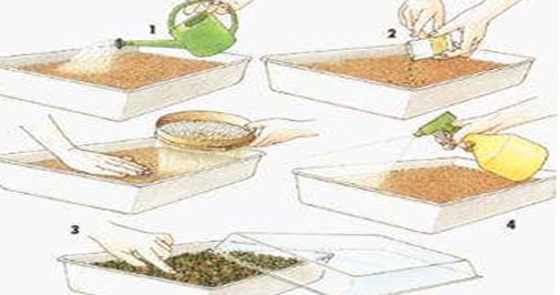 как происходит размножение эхмеи дома