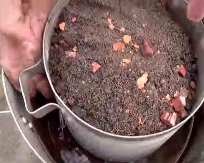 Цветок цикас уход в домашних условиях, размножение
