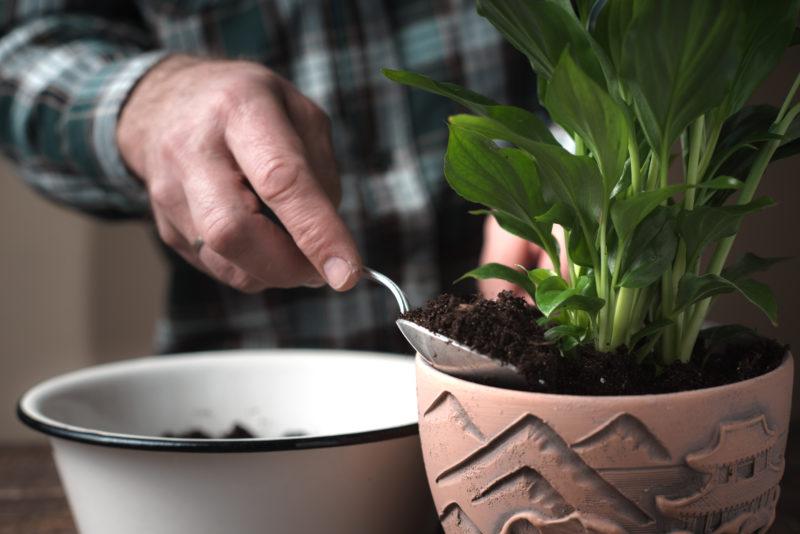 Красивейшее комнатное растение спатифиллум (женское счастье)