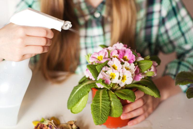 Обычные спички спасут умирающее растение