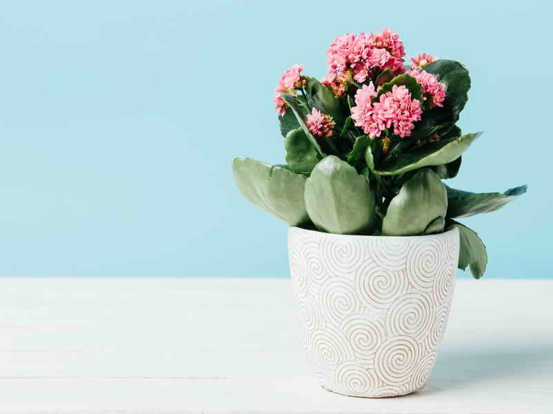 Комнатные цветы, которые можно поливать 1-2 раза в месяц. И даже симпатично смотрятся