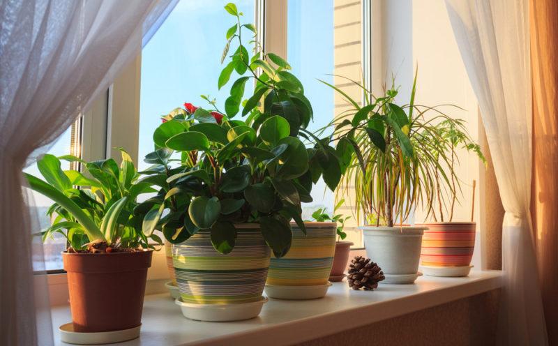 5 ситуаций, когда новый цветок может принести в дом одни беды