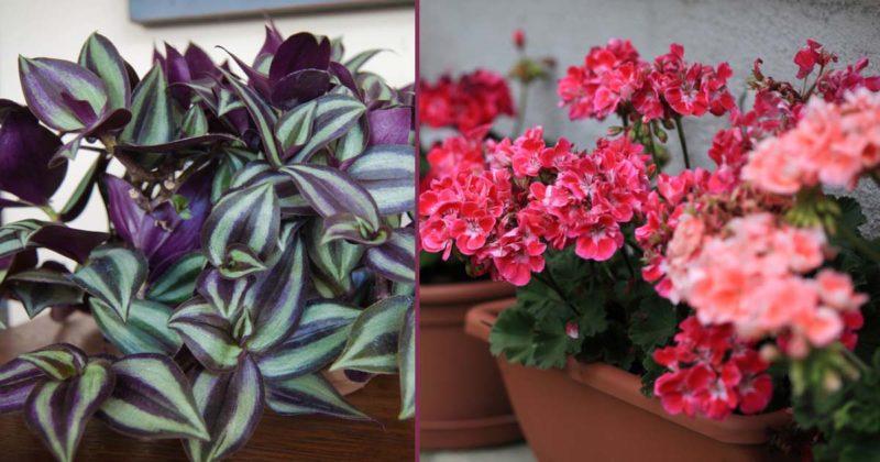 5 домашних растений, которые защищают дом от сглаза и порчи