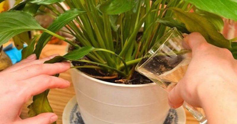 6 простых удобрений для домашних цветов, которые можно получить в процессе подготовки новогоднего стола