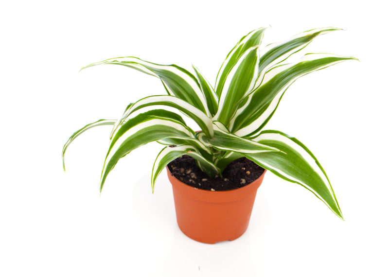 6 растений, с которыми ваша работоспособность повысится
