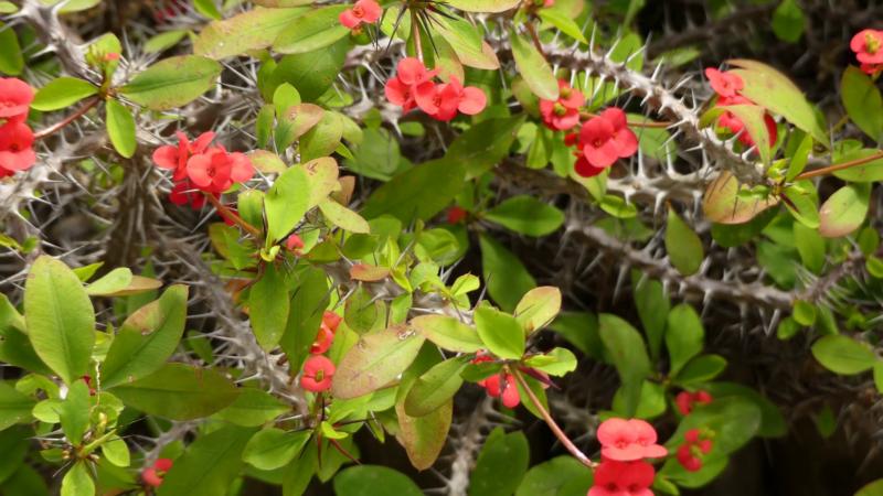6 растений, которые не загубит даже очень плохой цветовод