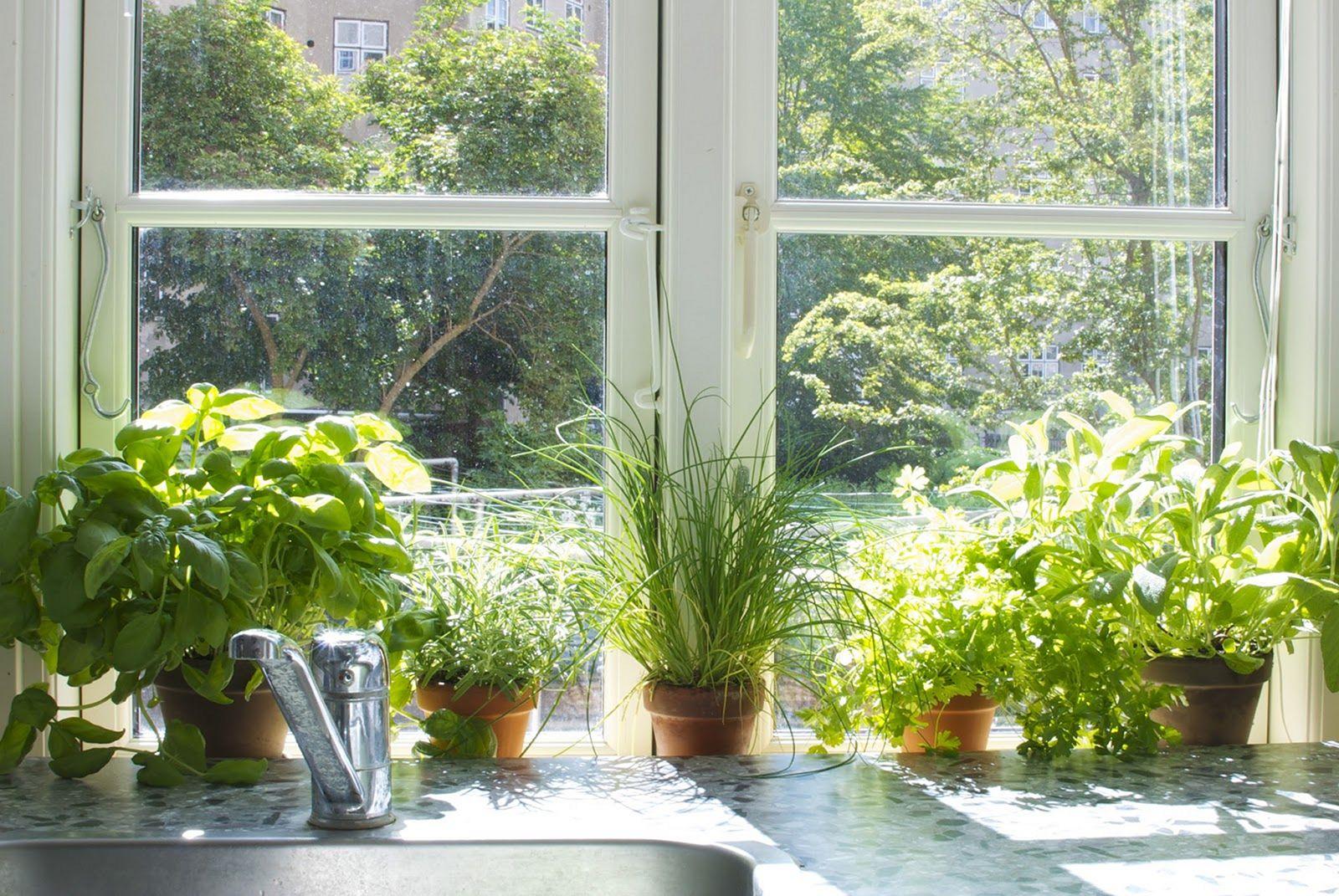 современная картинки окна с растениями что