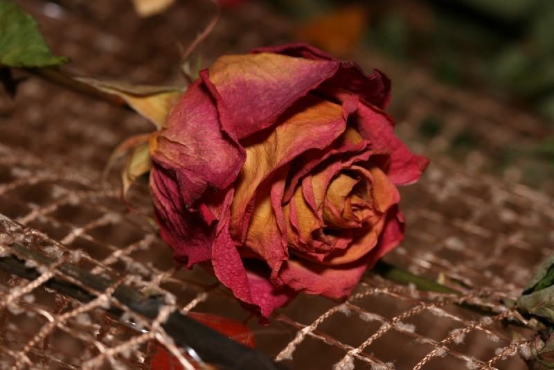 4 совета, которые помогут засушить розы так, чтобы они не были похожи на мусор