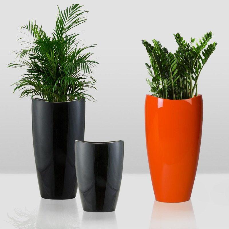 Домашние растения, которым будет комфортно в высоких горшках