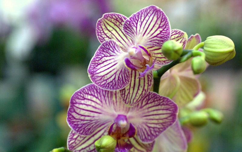 Что нужно знать перед покупкой орхидеи, чтобы она не принесла в ваш дом беды