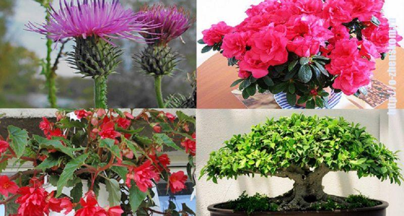 5 растений-талисманов, которые защитят ваш дом от неприятностей
