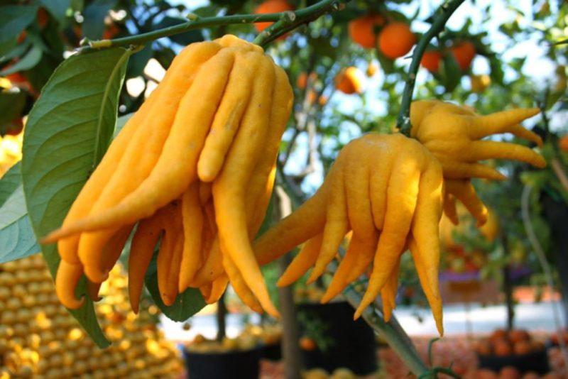 5 жутких растений со всего мира: не покупайте их, даже если очень хочется экзотики
