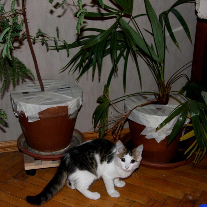 Как защитить домашние растения от проделок кота
