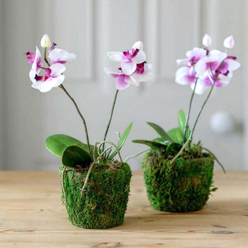 Пересадка орхидеи в домашних условиях: инструкции, уход