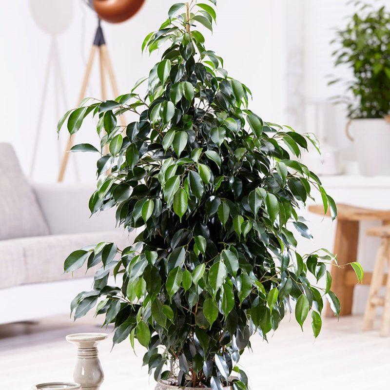 Незримая сила: на какие сферы жизни влияют комнатные растения