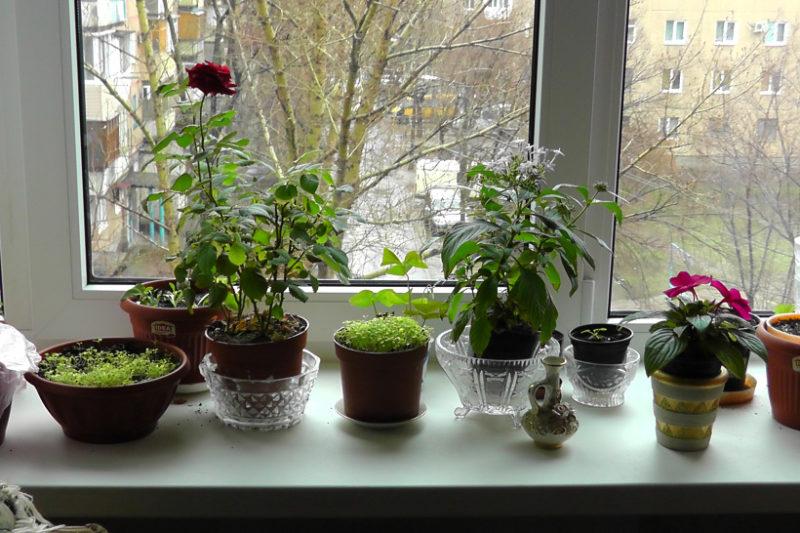 Как узнать название растения на соседском подоконнике, чтобы купить такое же себе