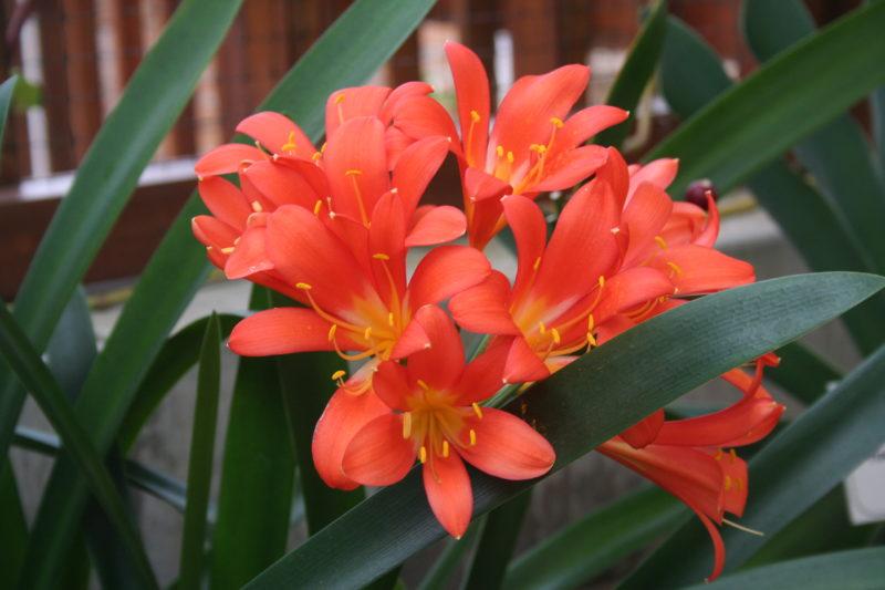 Неприхотливые комнатные цветы на круглый год