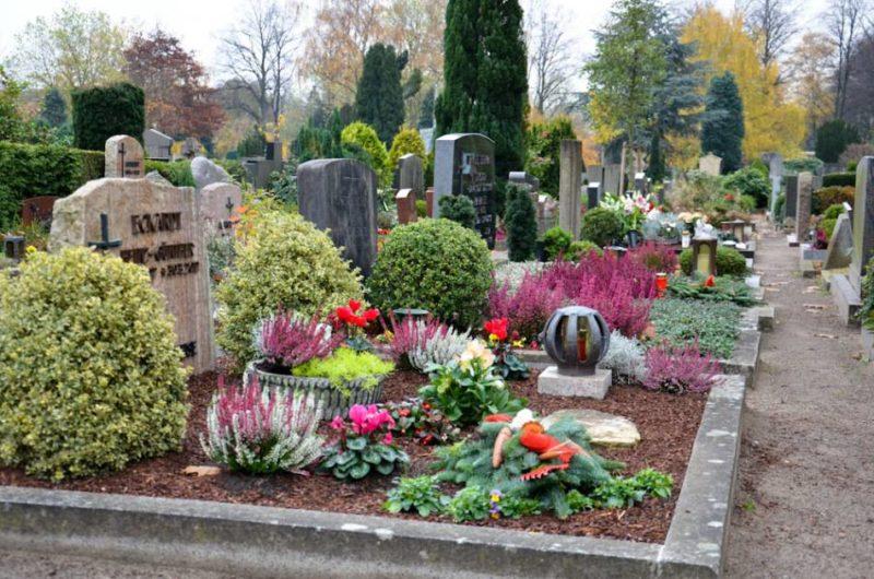 Какие цветы посадить на кладбище, чтобы они цвели все лето