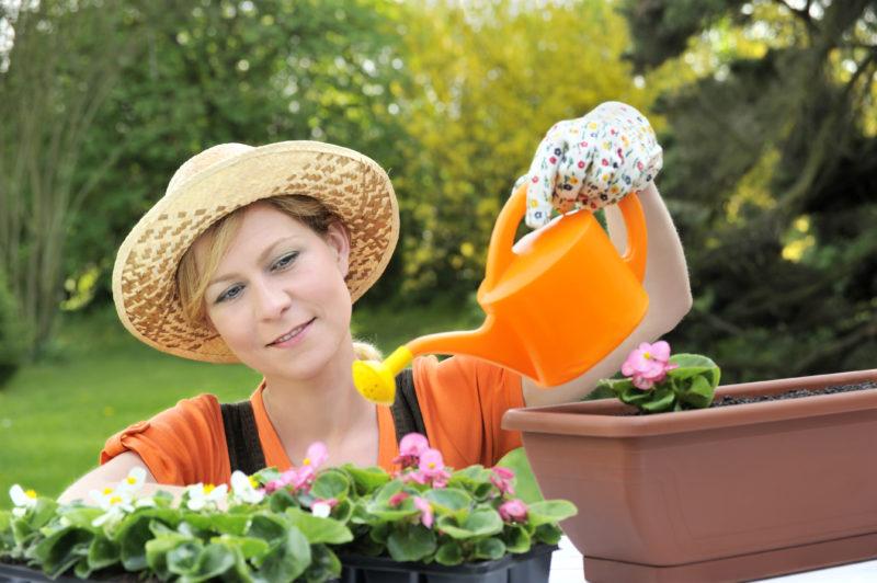 Бегония: уход и размножение в домашних условиях