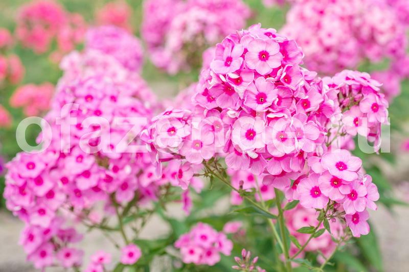 7 лучших вариантов многолетних цветов, которые можно посадить осенью