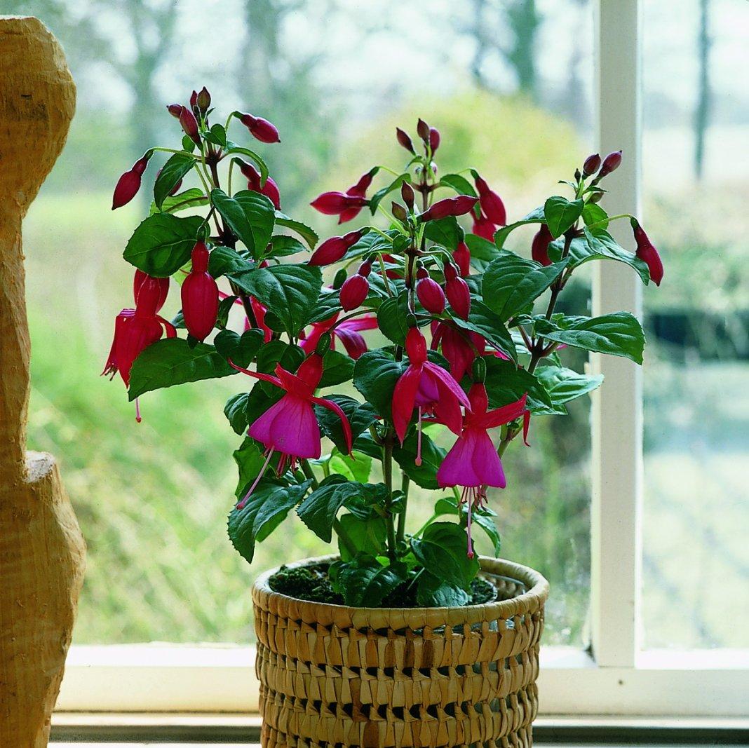 Домашние растение цветы картинки