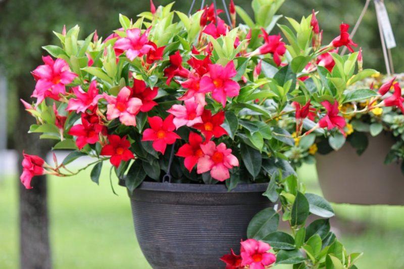 7 растений, которые опасны для домашних питомцев